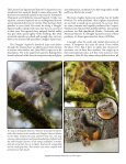 Squirrel Douglas' By Don Boucher Photography By Lisa Millbank - Page 4