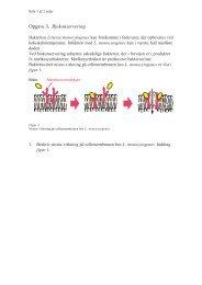 Opgave 3. Biokonservering