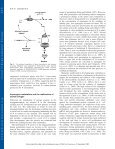 Ammonium assimilation and amino acid metabolism in conifers - Page 6
