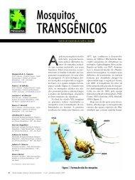 Mosquitos transgênicos - Biotecnologia