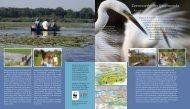 Zoetwaterbuffer IJsselmonde (flyer) - ARK Natuurontwikkeling