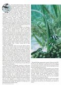 Seagrass-Watch_Mag_Issue47_pp21-52 - Page 2