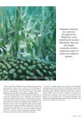 Seagrass-Watch_Mag_Issue47_pp21-52 - Page 3