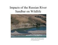 Impacts of the Russian River Sandbar on Wildlife - Stewards of the ...
