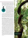 Por que as florestas são diferentes - LERF - USP - Page 4