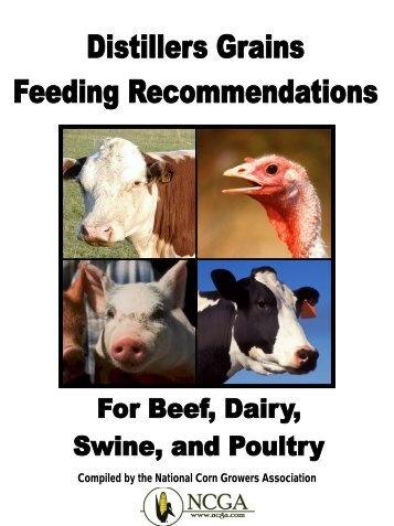 Distillers Grains Feeding Recommendations. - Distillers Grains By ...