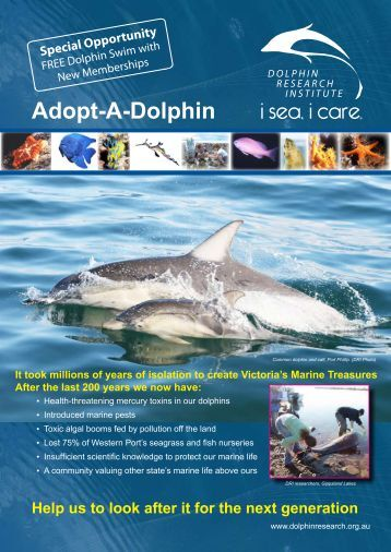 Download - Dolphin Research Institute, Inc
