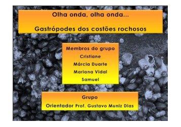 Gastrópodes dos costões rochosos