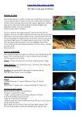 Dolphin Underwater & Adventure Club March 2009 Newsletter - Page 5