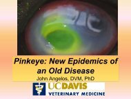 Pinkeye Prevention and Treatment: March 2008 Update