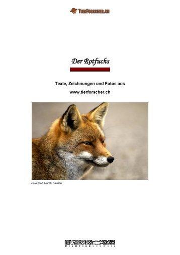 Der Rotfuchs - Tierforscher.ch