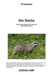 Dachs - Tierforscher.ch