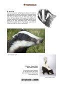 Dachs - Tierforscher.ch - Seite 3