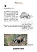 Dachs - Tierforscher.ch - Seite 5