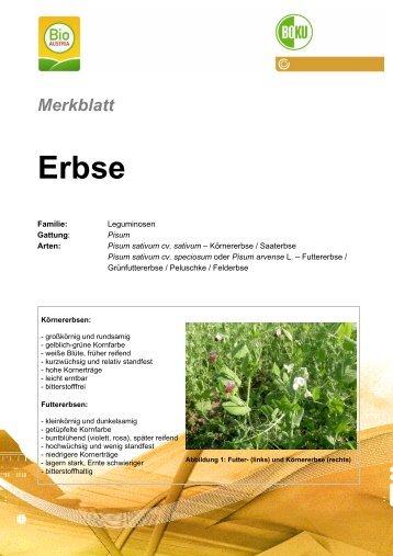 Merkblatt Erbse - Institut für ökologischen Landbau
