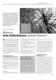 Warum tote Käferbäume stehen lassen? Da - Waldwissen.net