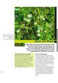 Einheimische Pflanzen - Seite 4