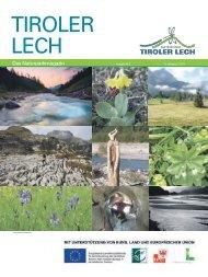 Silberdistel - Naturpark Tiroler Lech
