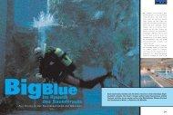 BigBlue Im Rausch des Sauerkrauts - tintenfisch - text und konzept
