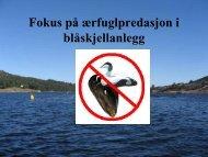 Fokus på ærfuglproblematikken - BluePlanet AS