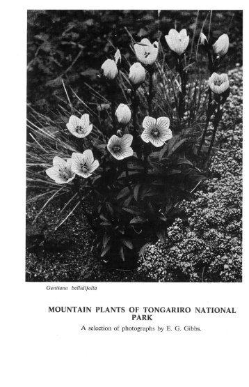 MOUNTAIN PLANTS OF TONGARIRO NATIONAL PARK