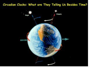 Circadian Clocks: What are They Telling Us Besides Time?