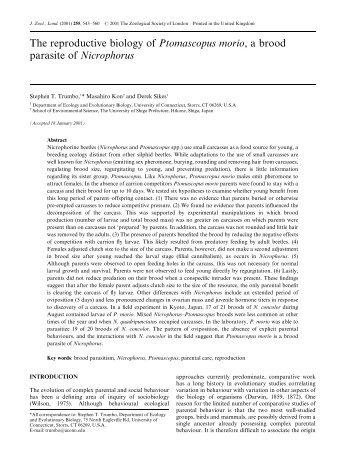 Ptomascopus morio... - Cambridge Journals - Cambridge University ...