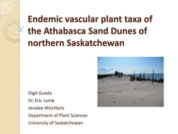 Endemic vascular plant taxa of the Athabasca Sand Dunes of ...