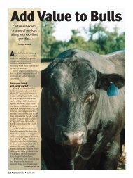 Add Value to Bulls - Angus Journal