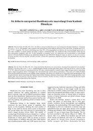 Six hitherto unreported Basidiomycetic macrofungi from Kashmir ...
