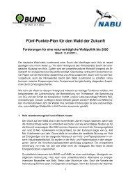 Fünf-Punkte-Plan für den Wald der Zukunft - BUND