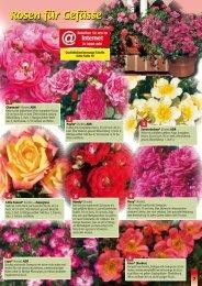 Rosen für Gefässe