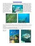 Dolphin Underwater & Adventure Club September 2008 Newsletter - Page 4