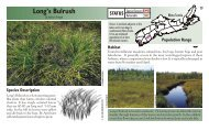 Long's Bulrush - Species at Risk