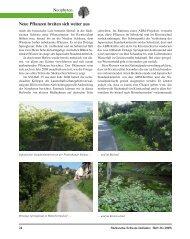 Neophyten Neue Pflanzen breiten sich weiter aus - Sächsische ...