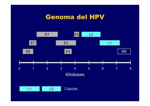 Carcinogénesis por HPV