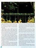 Status de ocorrência e hábitos alimentares do gaturamo-bandeira ... - Page 2