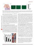 Platelets contribute to postnatal occlusion of the ductus arteriosus - Page 3