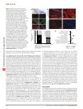 Platelets contribute to postnatal occlusion of the ductus arteriosus - Page 6