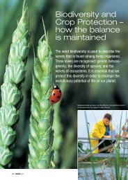 Download: ( 486 KB pdf) - Bayer CropScience Mexico