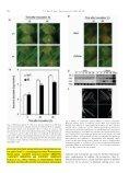 Pathogen resistance of transgenic tobacco plants ... - iGEM 2012 - Page 5