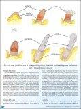 Osservazioni tecniche e scientifiche sul piumaggio degli uccelli. - Page 2