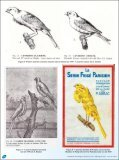 Osservazioni tecniche e scientifiche sul piumaggio degli uccelli. - Page 4