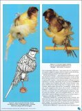 Osservazioni tecniche e scientifiche sul piumaggio degli uccelli. - Page 5