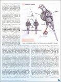 Osservazioni tecniche e scientifiche sul piumaggio degli uccelli. - Page 7