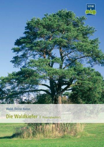 Waldkiefer - Schutzgemeinschaft Deutscher Wald