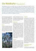 Waldkiefer - Schutzgemeinschaft Deutscher Wald - Page 2