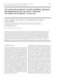 Mycosphaerella punctiformis revisited: morphology ... - CBS