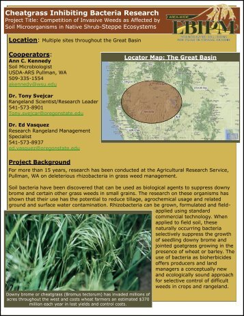Cheatgrass Inhibiting Bacteria Research