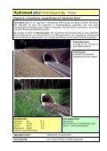 Prospekt Nassansaat - SW-Düngesysteme GmbH - Seite 3